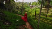 индонезийский : Woman walking on Tegalalang Rice Terrace, Bali Стоковые видеозаписи