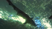 deniz yaşamı : The underbelly of a shark swimming by. Low angle. Stok Video