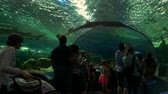 zvěř a rostlinstvo : Toronto, Ontario. May, 2017. People walking in the underwater tunnel of a public aquarium. Aquariums today can hold millions of liters of water and house giant species such as sharks and whales. Dostupné videozáznamy