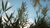 a view : Blades of grass and fluttering in a breeze with a sunny sky above. Low angle. Close up.
