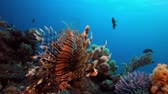 buborékok : Tropical underwater fish reef marine lion-fish (Pterois miles), Tropical colorful underwater seascape, Reef coral scene, coral reef, Colorful tropical coral reefs, Marine life fish garden