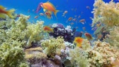 potápěč : Underwater Colorful Tropical Fishes and Beautiful Corals. Underwater colorful sea fish, Tropical reef marine, Corals tropical life, Colorful underwater seascape, Soft-hard corals seascape, Reef coral scene, Coral garden, underwater happy orange fish