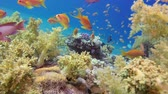 explorando : Beautiful Coral Garden. Underwater sea fish. Tropical reef marine. Colorful underwater seascape. Soft-hard corals seascape. Reef coral scene. Coral garden. underwater ambience coral reefs.