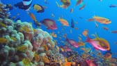 explorando : Red Sea Scene. Underwater colorful sea fish. Tropical reef marine, Corals tropical life. Colorful underwater seascape. Soft-hard corals seascape. Reef coral scene. Coral garden. underwater happy orange fish