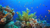 búvár : Tropical Colorful Underwater Seascape. Tropical underwater sea fish. Underwater fish reef marine. Soft and hard corals. Underwater fish garden reef. Reef coral scene. Coral garden seascape. Colorful tropical coral reefs.