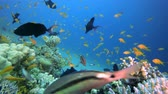 Fish Reefs Seascape. Tropical underwater sea fish. Colourful tropical coral reef. Scene reef.  Marine life sea world. Underwater fish reef marine. Tropical colourful underwater seascape. Underwater fish garden reef. Reef coral scene. Coral garden seascape Стоковые видеозаписи