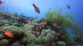 Underwater Sea World Life. Tropical underwater sea fishes. Underwater fish reef marine. Tropical colourful underwater seascape. Underwater reef. Reef coral scene. Coral garden seascape. Colourful tropical coral reefs