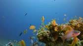 Underwater Beautiful Scene. Underwater sea fish. Tropical fish reef marine. Colourful underwater seascape. Soft-hard corals seascape. Reef coral scene. Coral garden seascape. Underwater ambience coral reefs