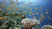 Tropical Fish Coral Reef. Tropical underwater sea fishes. Underwater fish reef marine. Tropical colourful underwater seascape. Underwater reef. Reef coral scene. Coral garden seascape. Colourful tropical coral reefs