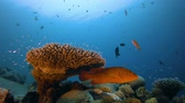 Лев : Marine Underwater Tropical Fish Garden. Underwater colourful sea fish. Tropical reef marine. Corals tropical life. Colourful underwater seascape. Soft-hard corals seascape. Reef coral scene. Coral garden. Underwater happy orange fish Стоковые видеозаписи