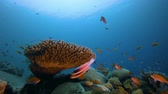 Лев : Colourful Tropical Reef Scene. Underwater colourful sea fish. Tropical reef marine. Corals tropical life. Colourful underwater seascape. Soft-hard corals seascape. Reef coral scene. Coral garden. Underwater happy orange fish