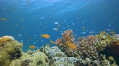 Лев : Underwater Marine Life. Tropical underwater sea fish. Underwater fish reef marine. Soft and hard corals. Underwater fish garden reef. Reef coral scene. Coral garden seascape. Colourful tropical coral reefs.