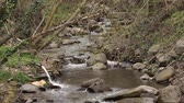 rochoso : Video of small mountain river with green vegetation on the shore. Stock Footage