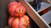 hile : Pumpkins and a black cat at the porch of the house during the Halloween.