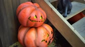 tomada : Halloween home decorations- Pumpkins and a black cat at the porch of the house