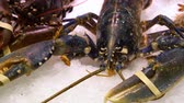 live lobster on the ice market counter