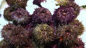 fresh sea urchins on a market counter in the snow Stok Video