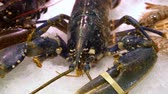 close up of live lobster on the ice market counter. Live lobster with big claws Stok Video