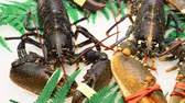 two fresh lobsters in the snow at a marine market counter Stok Video