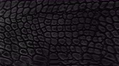 crocodilo : Snake skin background. Close up. 4k  high quality footage. Stock Footage