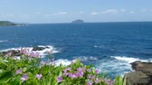 arranjando : Beautiful beach with deep blue water and light blue sky and nice flower