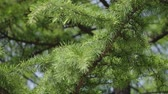 akut : Green tree in forest with barbs removed close-up with blurred background