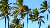 relaks : Palm Trees Swaying in the Wind