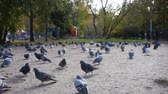 scaring : The girl runs past the pigeons, who are frightened, take off. HD, 1920x1080. slow motion. Stock Footage
