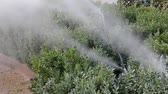 ekipman : Watering plants with fog irrigation system Stok Video