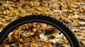 mezzi : Bicycle wheel with yellow maple leaves in autumn sunny day Filmati Stock