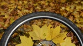 coberto : Bicycle wheel with yellow maple leaves in autumn sunny day Stock Footage