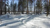 winter tree : Winter forest. In the footsteps of animals