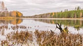 toco : Rotten snag in the pond. Autumn, Russia. Panorama. Time Lapse