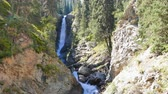 lampart : Waterfall Tears Leopard (Barsa), Barskoon gorge, Issyk Kul region, Kyrgyzstan Wideo