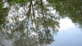 матовое : Reflection of trees in dirty river water. Стоковые видеозаписи