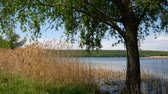 cana : Reservoir in Ukraine, a simple landscape Stock Footage