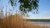 solitário : Reservoir in Ukraine, a simple landscape Stock Footage