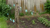 тент : Fence around the garden, colored rags in the wind.