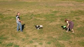 граница : SLOW MOTION, Adorable young dog plays with owner and a destroyed toy in the sunny countryside. Playful border collie puppy tugging on a shredded frisbee during playtime in nature. Стоковые видеозаписи