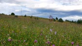 Wild mountain grass in the Carpathians.