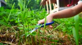 snoeien : Child girl cutting grass on a lawn with scissors. Stockvideo