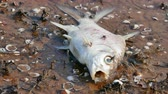 ethics : Dead fish in the water represents a bad environment.