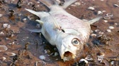 morrer : Dead fish in the water represents a bad environment.