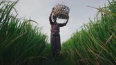 obter : Indian farmer removing wicker basket from his head Vídeos