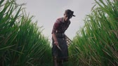 reaping : Country man treating plant with sickle Stock Footage