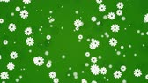 белый : Abstract green motion background with flowers