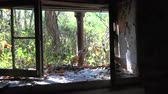 estragado : Window of Abandoned House in the Woods