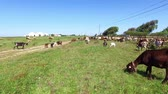 serpentina : Goats and sheep in the countryside from Portugal