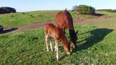 progeny : Mare with her foal in the meadow