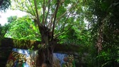 Buddha under the Banyan tree on Bali Indonesia Stock Footage
